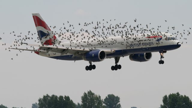 Photo of Reducing Bird Strikes- Radar Networks